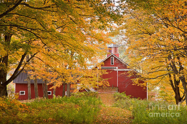 Photograph - Maple Allee by Susan Cole Kelly