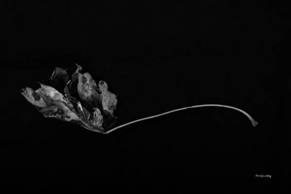 Photograph - Maple Grace by Randi Grace Nilsberg