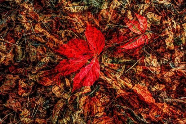Photograph - Maple Leaf by David Matthews