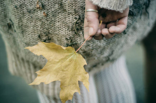 Photograph - Maple Leaf. Prickle Tenderness by Inna Mosina