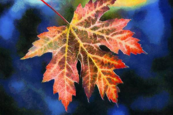 Syrup Digital Art - Maple Leaf by Labron Jacobs