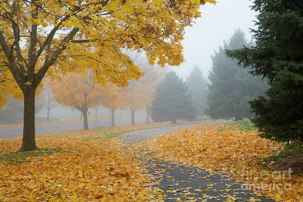 Wall Art - Photograph - Maple Leaf Path by Idaho Scenic Images Linda Lantzy