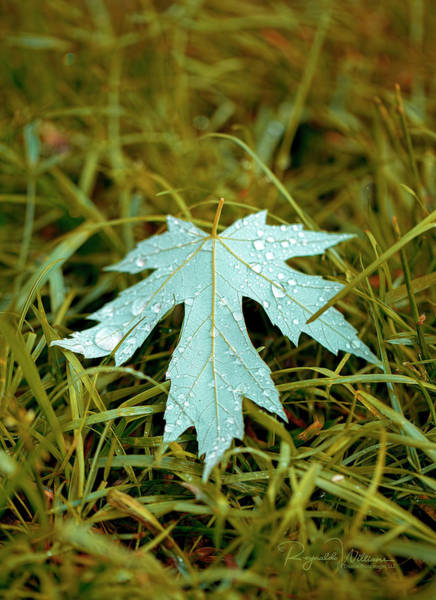 Photograph - Maple Leaf by Reynaldo Williams