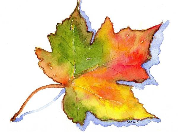 Painting - Maple Leaf Turning by Carlin Blahnik CarlinArtWatercolor