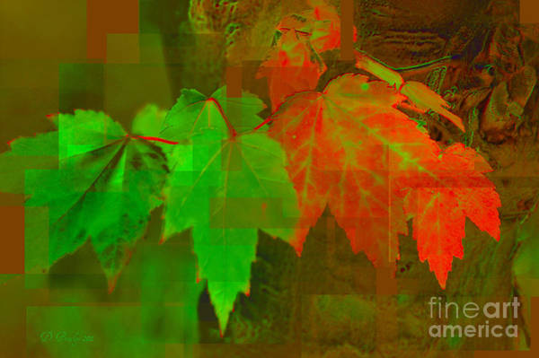 Photograph - Maple Leafs by Donna Bentley