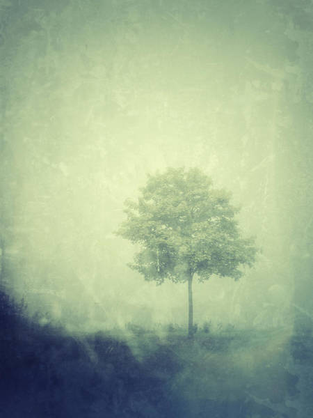 Photograph - Maple Mist by Jill Love