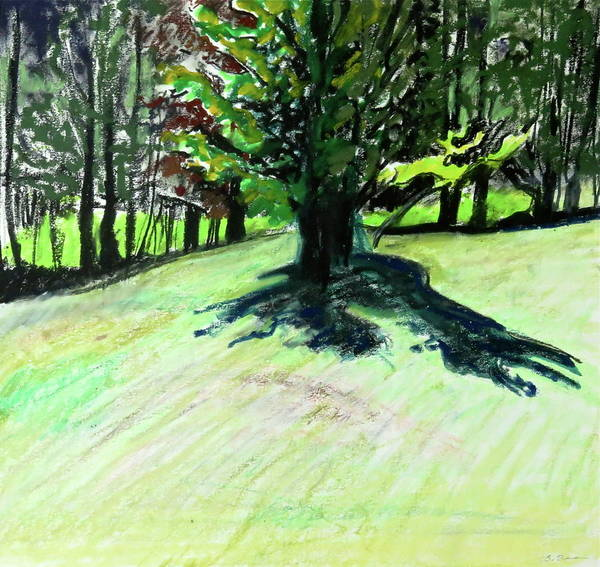 Catskill Drawing - Maple Shadow by Bonnie See
