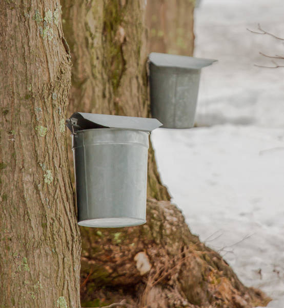 Photograph - Maple Sugar Buckets by Brian MacLean
