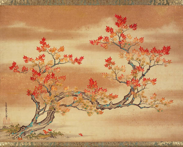 Maple Drawing - Maple Tree In Autumn by Tosa Mitsuoki