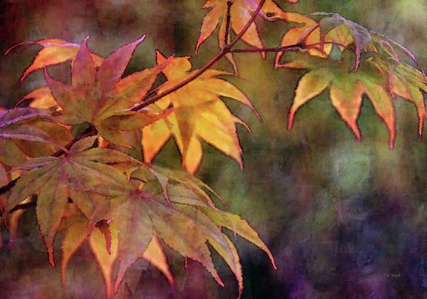 Photograph - Maples Golden Glow 5582 Idp_2 by Steven Ward