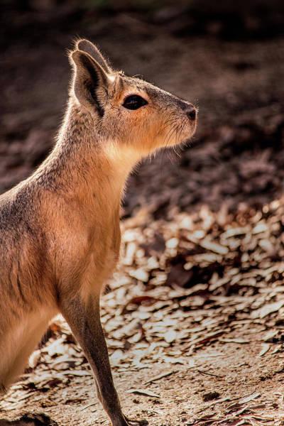 Photograph - Mara Profile by Don Johnson