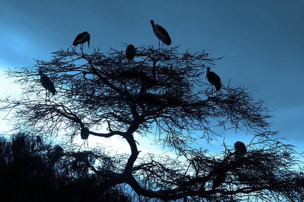 Photograph - Marabou Blues by Aidan Moran
