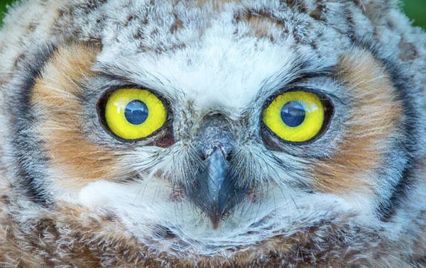 Photograph - Marble Eyes by Kevin Dietrich