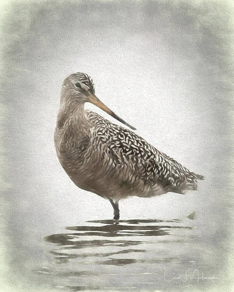 Wall Art - Digital Art - Marbled Godwit by Carol Fox Henrichs