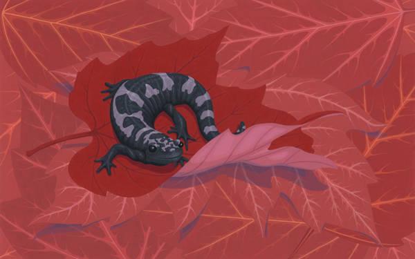 Wall Art - Painting - Marbled Salamander by Nathan Marcy