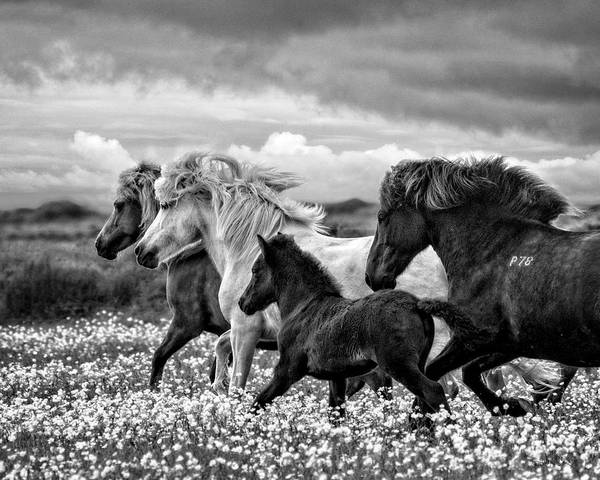 Mare And Foal Photograph - March Of The Mares by Joan Davis