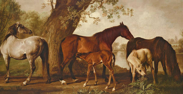 Chestnut Horse Painting - Mare And Foals by George Stubbs