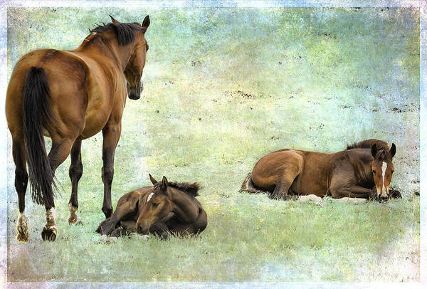 Photograph - Mare And Two Foals by Belinda Greb