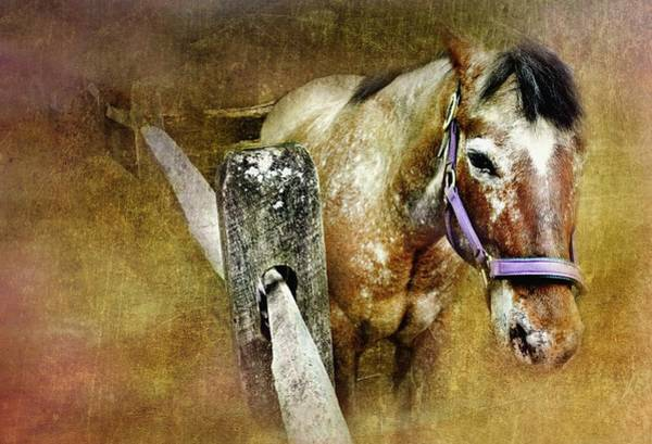Stamford Photograph - Mare by Diana Angstadt