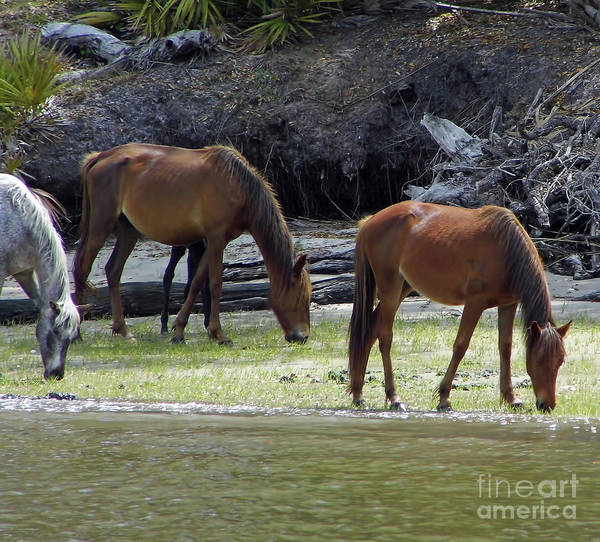 Photograph - Mares At The Coastline by D Hackett