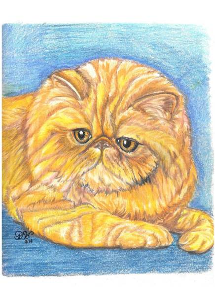 Orange Tabby Drawing - Marigold by Patricia Wilt