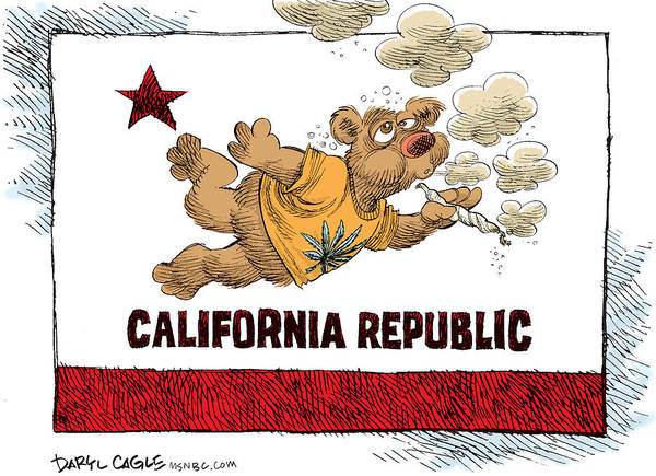Drawing - Marijuana Referendum In California by Daryl Cagle