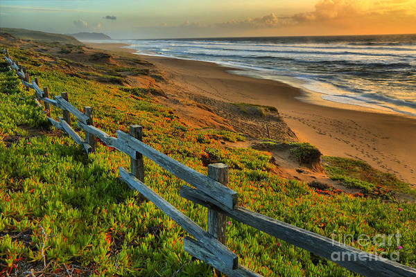Photograph - Marin County Golden Glow by Adam Jewell
