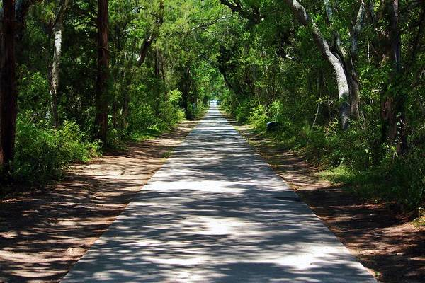 Photograph - Maritime Forest In The South  by Cynthia Guinn