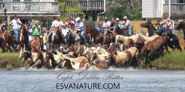 Photograph - Marlboro Men With Ponies by Captain Debbie Ritter