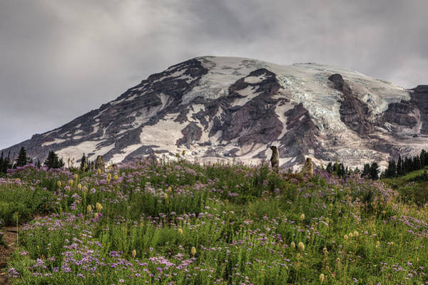 Photograph - Marmots View Of Mount Rainier by Mark Kiver