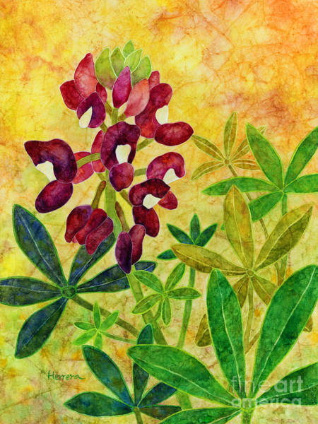 Wall Art - Painting - Maroon Bluebonnet by Hailey E Herrera