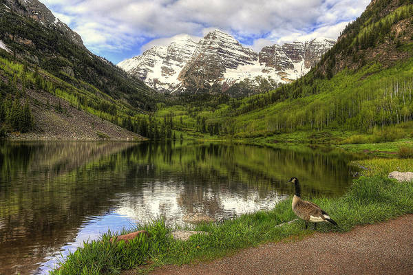 Photograph - Maroon Lake Goose by Ryan Smith