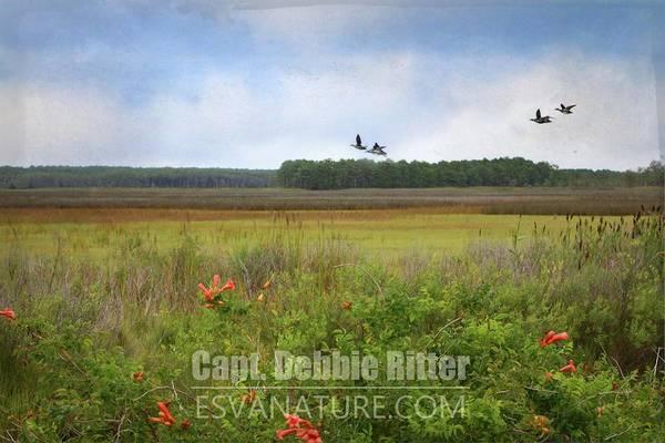 Photograph - Marsh 0607 by Captain Debbie Ritter