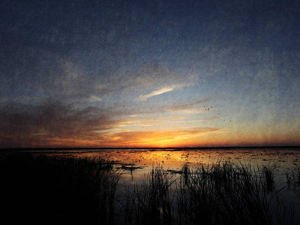 Photograph - Marsh Art by Charles McKelroy