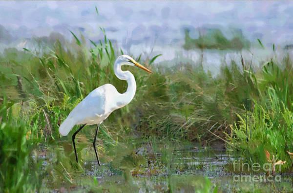 Egret Digital Art - Marsh Egret by Betty LaRue