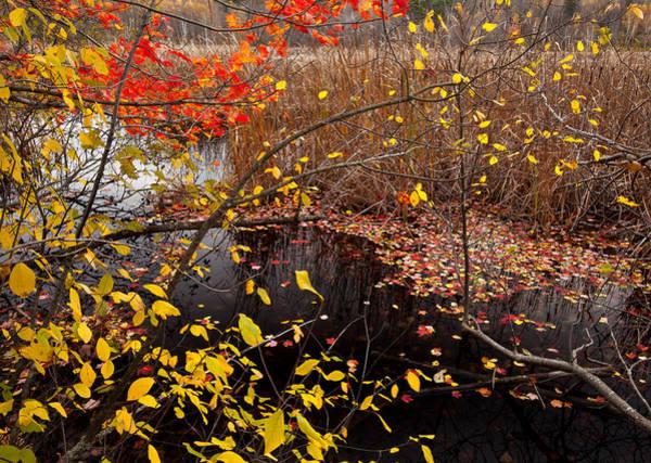 Wall Art - Photograph - Marsh Fall Colors by Irwin Barrett