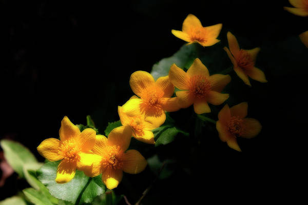 Photograph - Marsh Flowers by Scott Hovind