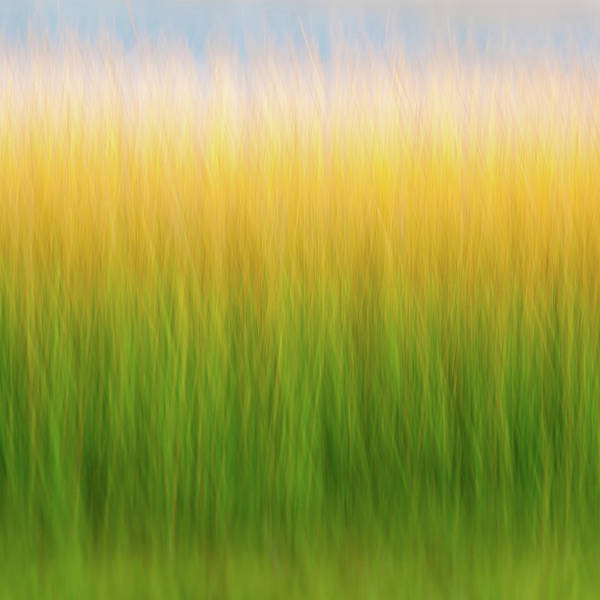 Photograph - Marsh Grass by John Whitmarsh