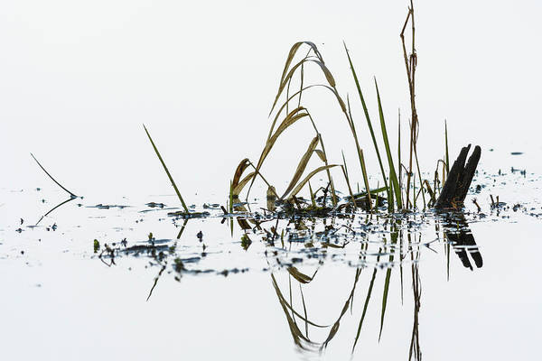 Photograph - Marsh Grass by Robert Potts