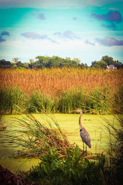 Photograph - Marsh Heron by Stacey Rosebrock