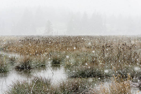 Photograph - Marsh In A Snowstorm by Robert Potts