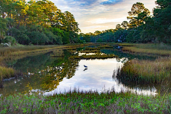 Photograph - Marsh In The Morning by Patricia Schaefer