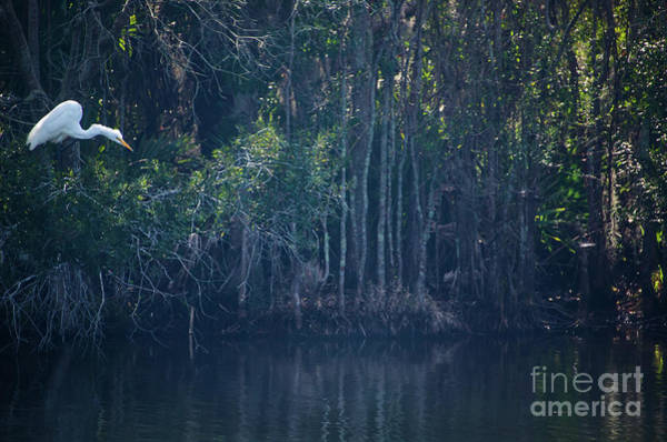 Photograph - Marsh Island Brid Sanctuary by Dale Powell