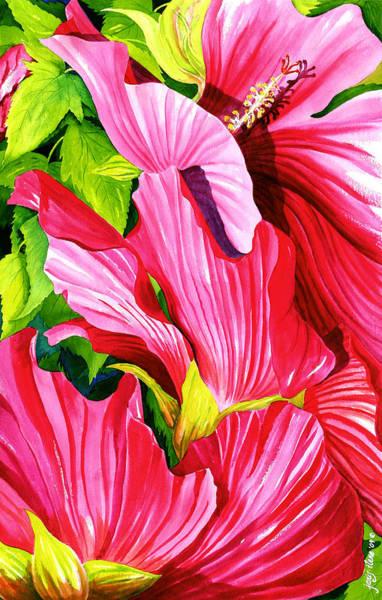 Hibiscus Flower Painting - Marsh Mallow Shrub by Janis Grau