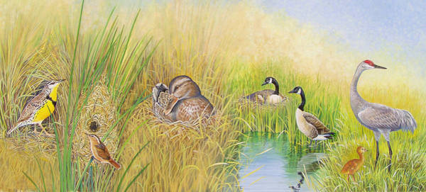 Meadowlark Painting - Marsh Nests by Shari Erickson