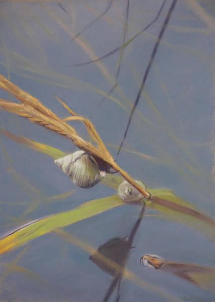 Pastel - Marsh Snail by Christopher Reid