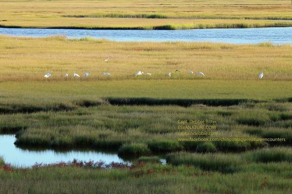 Photograph - Marsh Turning by Captain Debbie Ritter