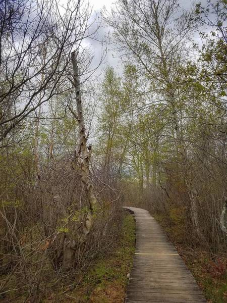 Photograph - Marsh Walk 2 by Mary Capriole