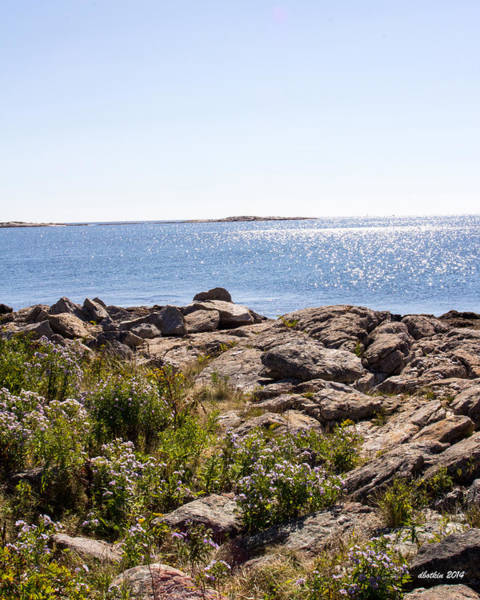Wall Art - Photograph - Marshall Point by Dick Botkin