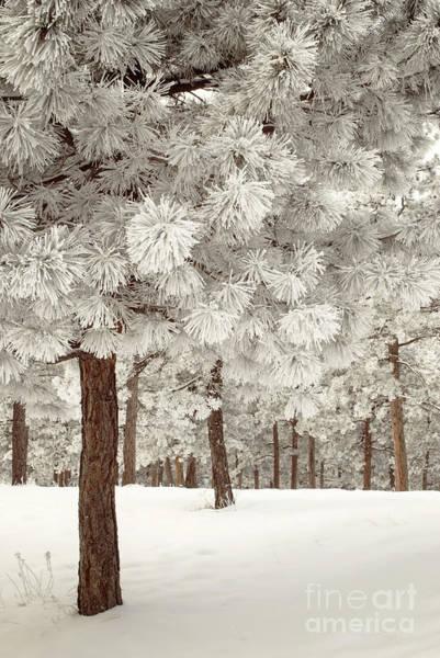 Photograph - Marshmallow World by Juli Scalzi